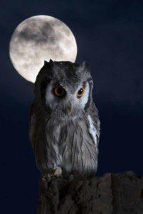 Сова и луна